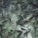 Aquakultur Nachteile
