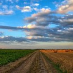 Ökolandbau: Unterschied zwischen bio und öko?