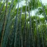 Textilien aus Bambusfasern: Verbrauchertäuschung?