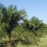 Produkte ohne Palmöl: eine App, die den Regenwald rettet