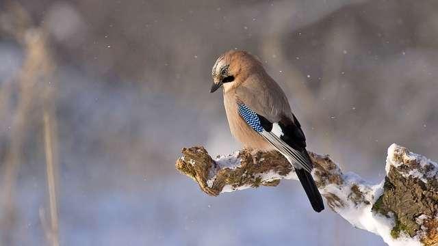 Vögel überwintern? Tipps zu richtigen Vogelfütterung im Winter