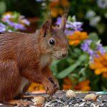 Naturgarten anlegen – 10 nützliche Tipps und Ideen, wie es dir gelingt