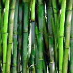Textilien aus Bambusfasern – Verbrauchertäuschung?