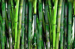 Textilien aus Bambus