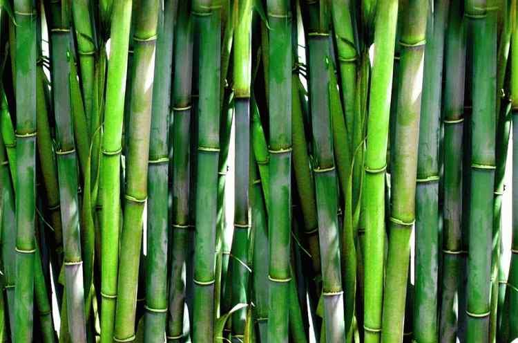 bamboo 20936 1280