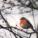 Vögel überwintern – 9 Tipps zum Füttern