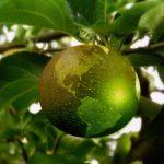LOHAS – nachhaltiger und gesunder Konsum liegt im Trend