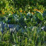 Biodünger selber machen – 7 natürliche Dünger für deinen Garten