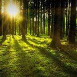 Baumsparvertrag Erfahrungen: Waldinvestments nur selten sinnvoll
