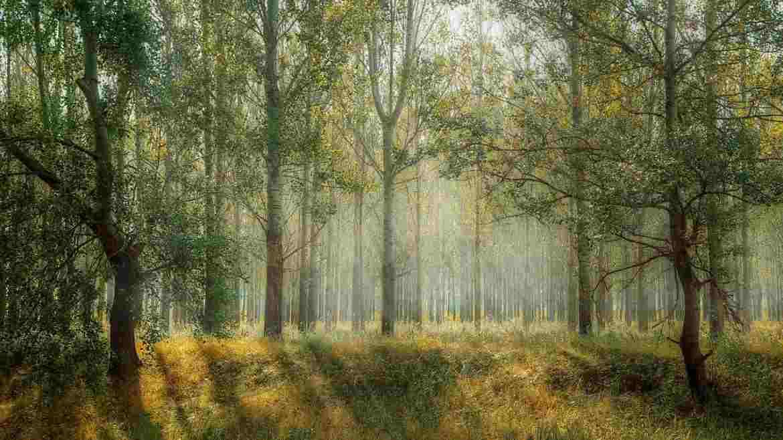 Waldinvestment